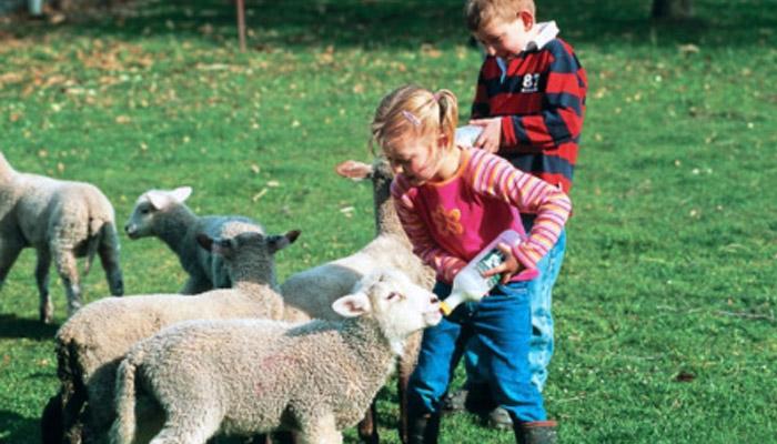 剪羊毛!遍地羊驼跑,袋鼠蹦蹦跳!