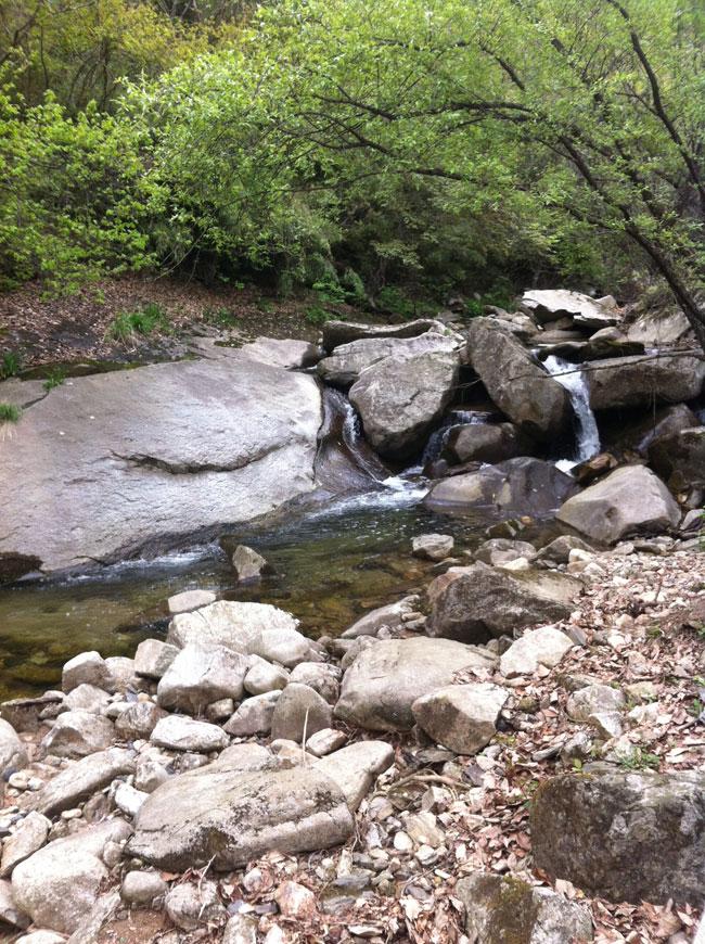 山清水秀鸟语花香,周末木王国家森林公园走一圈各种舒爽 .