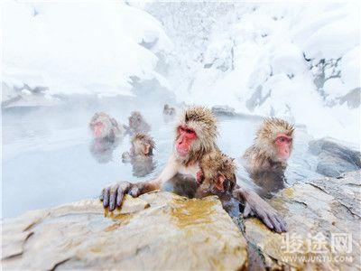 37401916-日本温泉