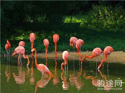 0164003-22391122-广东长隆野生动物园