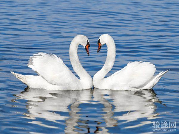 <直通车-三门峡天鹅湖、陕州地坑院美食纯玩1日游>赏候鸟天鹅,品地坑美食