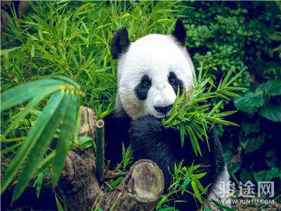 熊猫基地2
