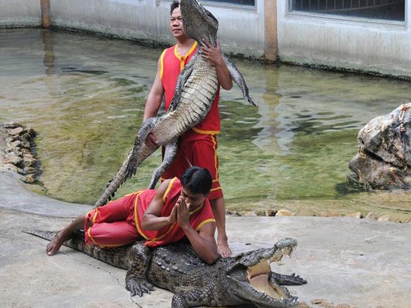 龍虎園鱷魚湖2-2