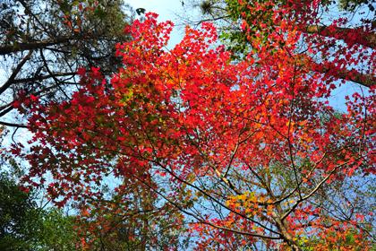 黑河國家森林公園怎么去 黑河國家森林公園好不好 黑河國家森林公園在哪里 黑河國家森林公園門票多少錢 黑河國家森林公園兩日游 黑河國家森林公園一日游 黑河國家森林公園攻略 黑河國家森林公園游記 黑河國家森林公園團購