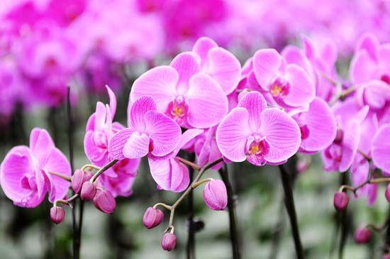 西部兰花园之兰花
