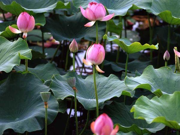 版纳热带花卉园傣族原始村寨2-2