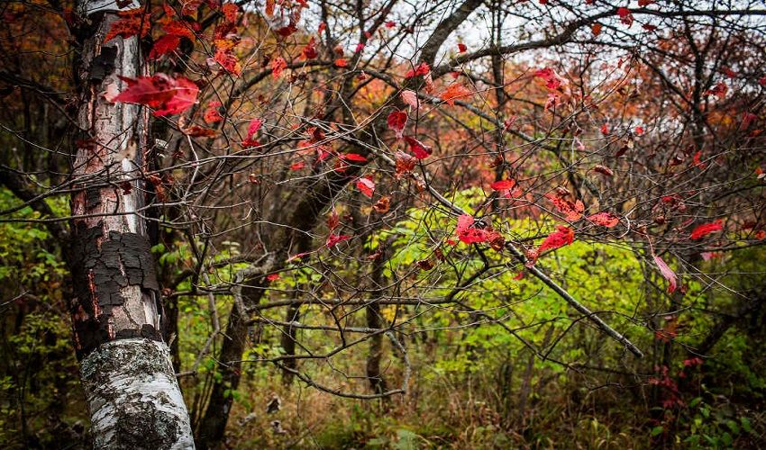 黃陵國家森林公園