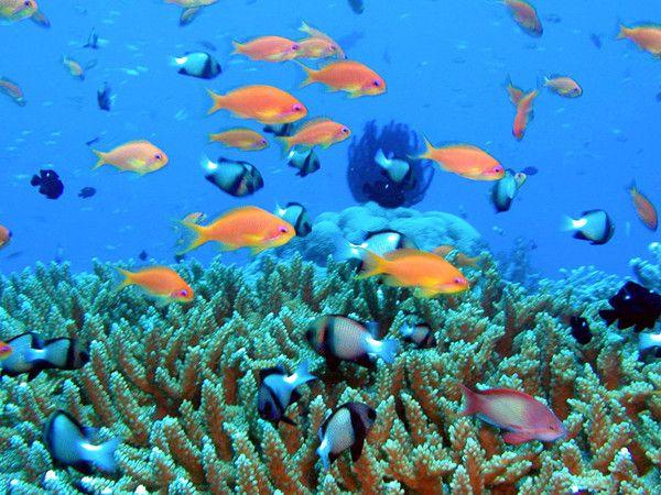 SIMILAN 群岛2-2