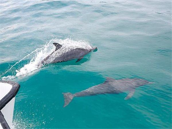 海豚岛蜜月岛
