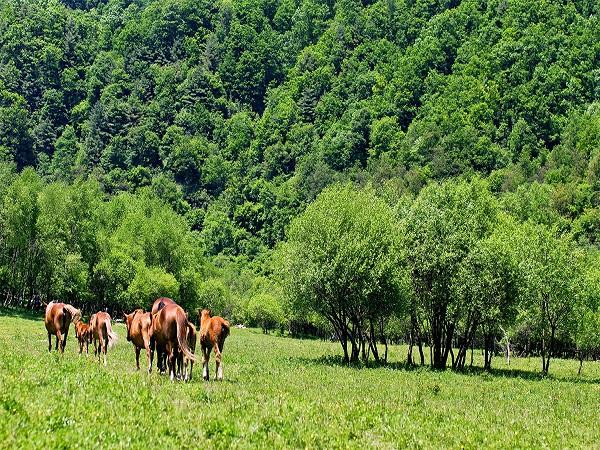 大水川国际旅游度假区