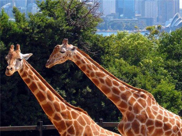 塔朗加野生动物园1