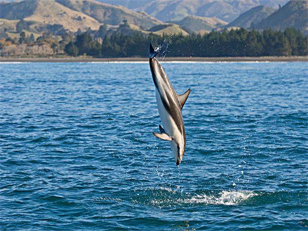 天阁露码海豚岛