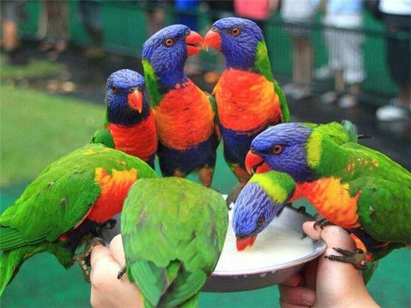 可倫賓野生動物保護園