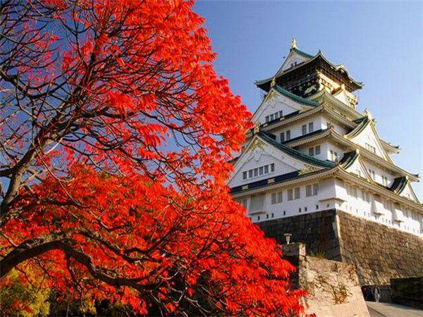 大阪城公园秋天