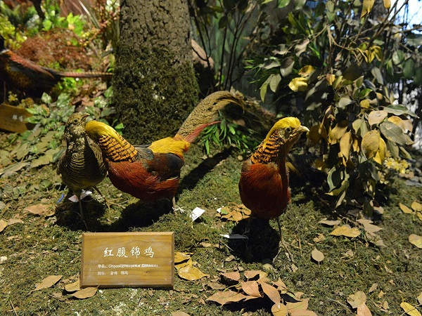 陕西自然博物馆