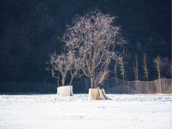 竹林畔滑雪场