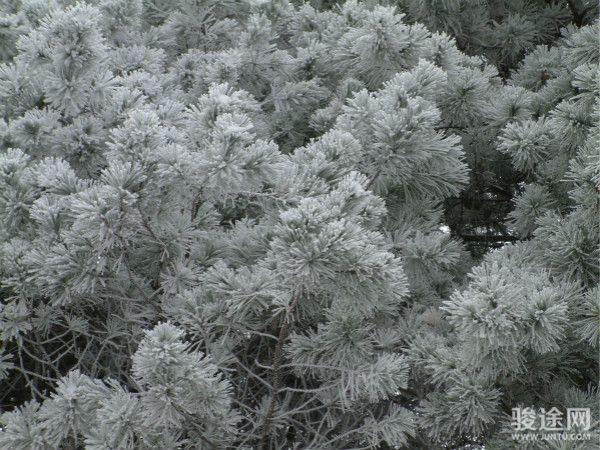 木王國家森林公園