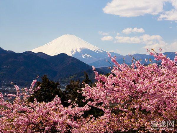 0069111-14257685-日本富士山樱花-粉