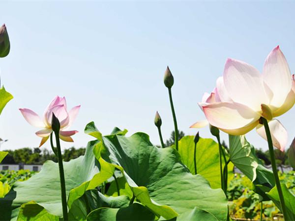 中国荷苑景区
