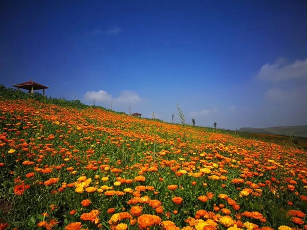 上山莊花藥谷景區
